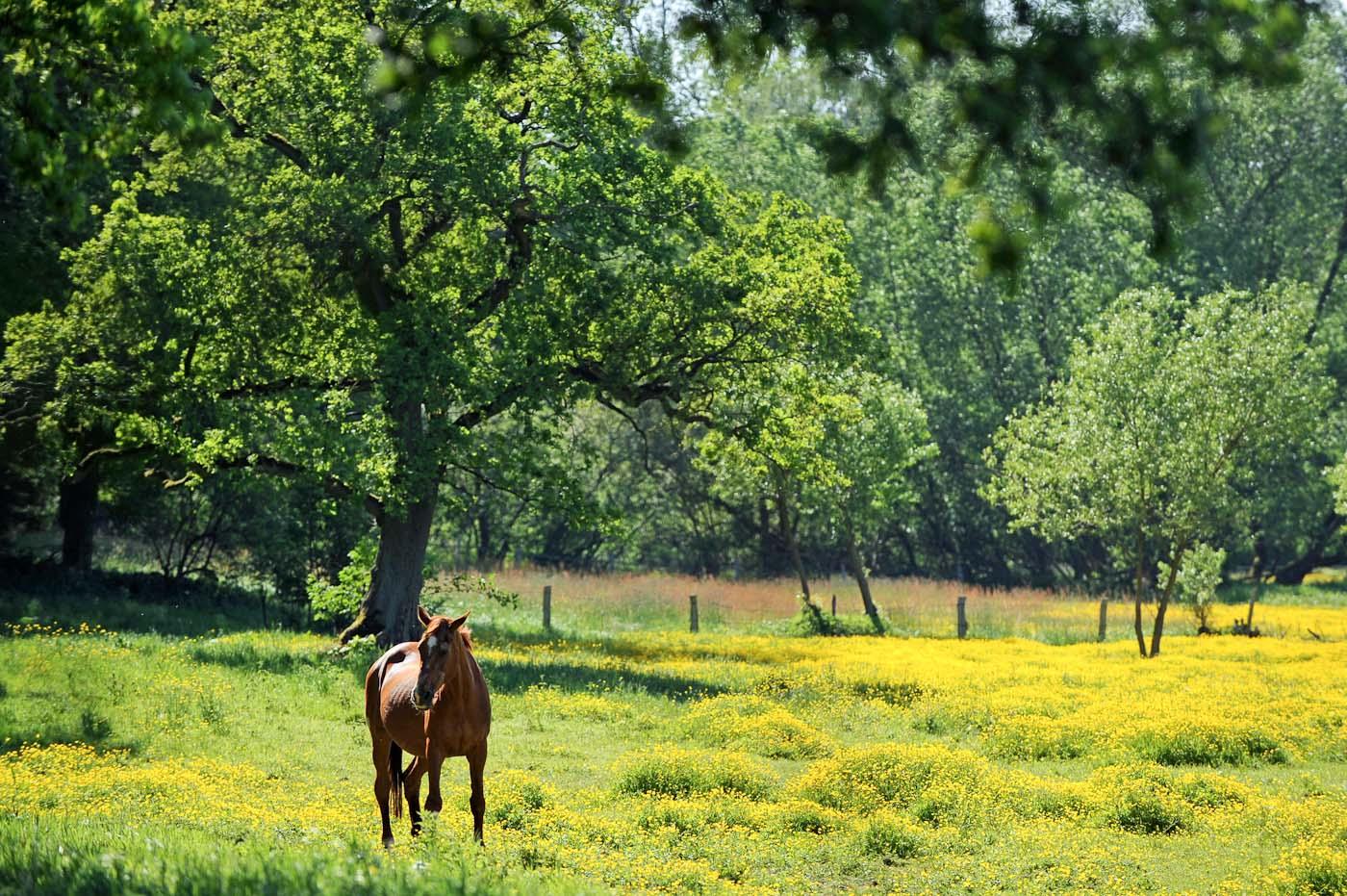 Foto ID 2014063013 Naturschutzgebiet Höltingbaum
